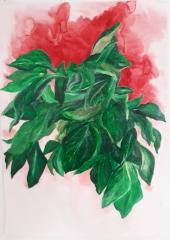 patricia cartereau, dessin, végétal